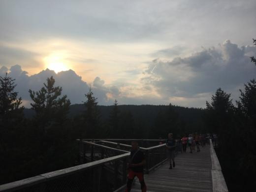 XINDL X odstartuje kulturní léto na Stezce korunami stromů